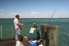 Kingfish are being caught from wharves on Manukau Harbour, like Cornwallis Wharf. Photo / Geoff Thomas
