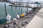The clean-up continues after the Mobil OIl spill at Tauranga Bridge Marina. Photo/Andrew Warner.