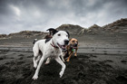 Dogs love a good run along the beach but not everyone is happy about it. Photo/file