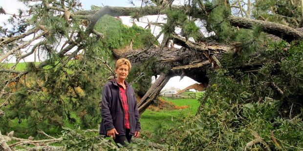 Local Wendy Dudek assessed the damages in her property after a 100-year-old pine tree fell down onto her property.
