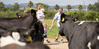 """Anna, carrying Noah, Jack and Olin Greenan have been successful at """"standing still"""" during the fall in dairy prices."""