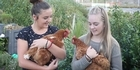 Watch: Watch: Plucky students keep three lucky hens