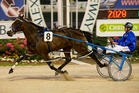 Dream About Me has opened as the $1.75 favourite for the NZ Oaks at Addington. Photo / Dean Purcell