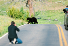 It's best to keep your distance when it comes to black bears. Photo / iStock