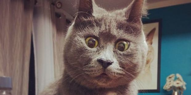 Meet Kevin - the permanently surprised cat. Photo / Instagram