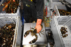 When the US had a glut of the crustaceans, it looked far afield for a new market. Photo / Matt McClain