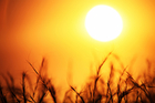 The study showed that heat extremes were quickly becoming more frequent for mainly poorer nations nearer the equator. Photo / iStock