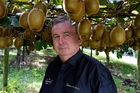 Dermott Malley on his Maungatapere kiwifruit orchard. Photo / John Stone