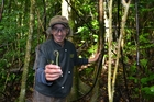 Charles Royal of Kinaki Wild Herbs with the edible portion of the pikopiko fern.
