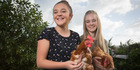 Anneka Green and her classmate Montana Sullivan hope to rescue more hens. Photo / Greg Bowker
