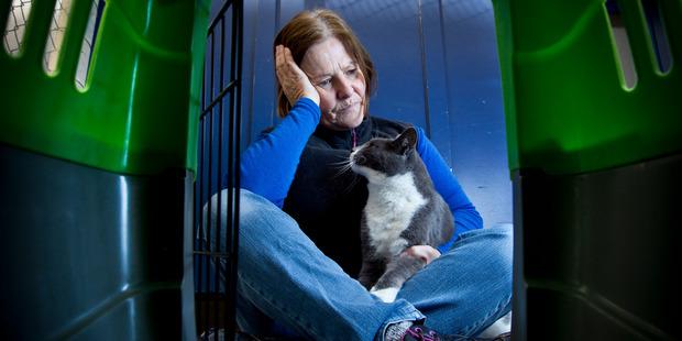 Loading SPCA shelter manager Karen Rolfe. Photo / Stephen Parker