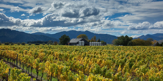 Moa Brewery in Blenheim sits among Marlborough's vines. Photo / Supplied