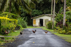 Rabobank said consumption of chicken meat in Southeast Asian countries is expected to rise 15 per cent over the next five year. Photo / Tourism Cook Islands