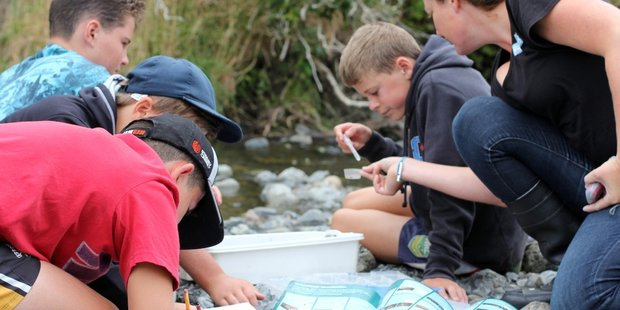 St Teresa's School students work with Greater Wellington Regional Council staff to identify aquatic life from the Waiorongomai Stream. PHOTO/SUPPLIED