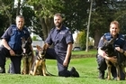Tauranga Senior Constable Kayne Cording and his colleagues in the police dog section are in mourning after his crime-fighting partner Yoda died - but his legacy will live on.