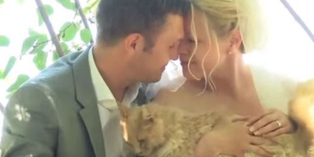 They dated for three years, a relationship founded on common principles and interests: cats. Photo / YouTube, KFSN