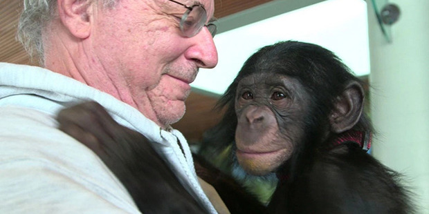 Animal-rights lawyer Steven Wise with a chimp named Teko. Photo courtesy of Pennebaker Hegedus films/HBO.