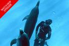 New Zealand freediver William Trubridge talks about his plea to McDonald's.