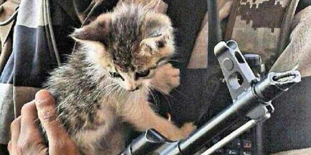 A top terrorism prosecutor has warned Isis is using kittens to lure jihadists online.