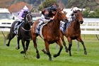 Volpe Veloce leads the field home at Wanganui. Photo / Race Images