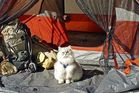 Who says you can't take cats anywhere? Photo / Camping With Cats