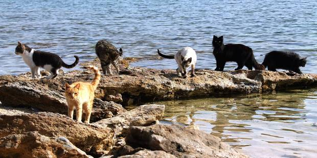Just some of the cats you could be playing with at Su Pallosu. Photo / I Gatti di Su Pallosu, Facebook
