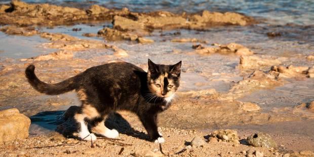 The cats of Su Pallosu don't mind the water. Photo / I Gatti di Su Pallosu, Facebook