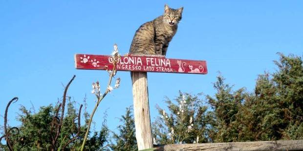 A friendly cat greets visitors to Su Pallosu's feline colony. Photo / I Gatti di Su Pallosu, Facebook