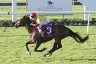 Fire Jet beat the older horses at Ellerslie last week and meets his own age in race 3 today. Photo / Trish Dunell
