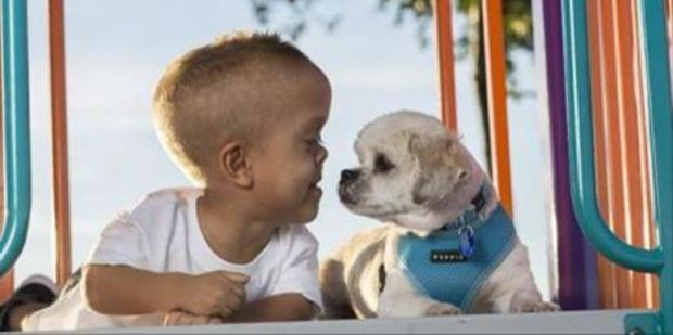 Buddy, the pint-sized dog has been a blessing for Quaden. Photo / Facebook/Stand Tall 4 Dwarfism