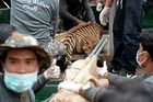 Tigers removed from Thai temple