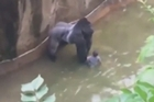 Zoo shoots and kills gorilla to save boy in enclosure