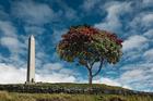A single tree stands on the tiji. Photo / Tupuna Maunga Authority
