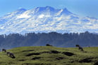 Snow is expected on Mt Ruapehu and all other ski fields across the country. Photo / Stuart Munro