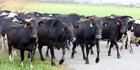 A global glut has seen dairy prices fall. Photo / Lynda Feringa