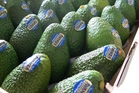 Just Avocados will exit the collaborative joint venture avocado marketing entity Avanza.