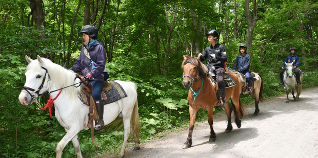 Loading Rescuers on horseback search for a 7-year-old boy who is missing in a Japanese forest in Nanae town, on Hokkaido. Photo / AP