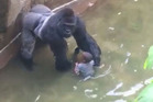 Animal lovers are furious that Harambe was shot dead after the boy climbed into his enclosure.