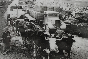 Bullocks and a truck hauling wool bales to Akitio Beach for loading onto boats. The wool being carted is from Akitio and Marainanga Stations.