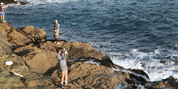 Casting floating baits from the rocks at Great Barrier is producing some unusual catches, like the turtle hooked this week. Photo / Geoff Thomas