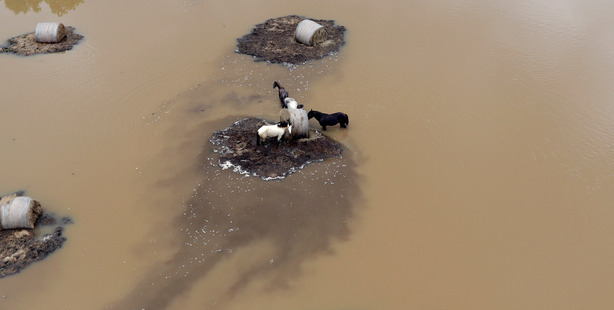 Horses surrounded by floodwaters in Rosharon, Texas. Photo / AP
