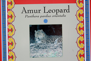 A photograph of an Amur leopard is shown at it's enclosure at the Utah's Hogle Zoo. Photo / AP