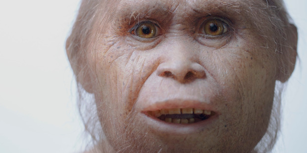 This 2015 picture provided by Kinez Riza shows a reconstruction model of Homo floresiensis by Atelier Elisabeth Daynes at Sangiran Museum and the Early Man Site. Photo / AP