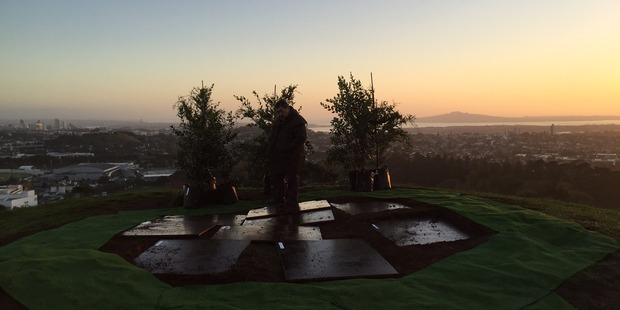 The trees to be planted at the dawn ceremony at One Tree Hill. Photo / Lincoln Tan