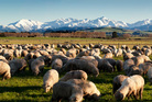 The Takitimu mountain range. Photo / Tourism Southland