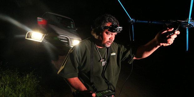 Ian Tarei, a field worker with the Omataroa Kiwi Project in the eastern Bay of Plenty, pictured tracking kiwi fitted with transmitters in bush near Whakatane. Photo/file