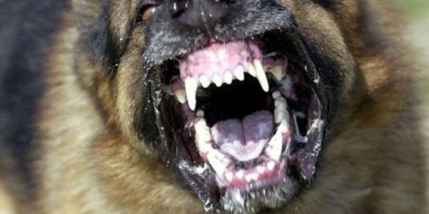 Animal control are investigating after a dog bit a woman in Takaka. Photo / File