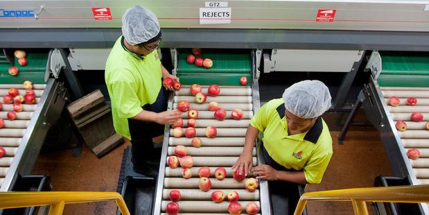 Packhouse of Whakatu Business Mr Apple. Photo / Glenn Taylor