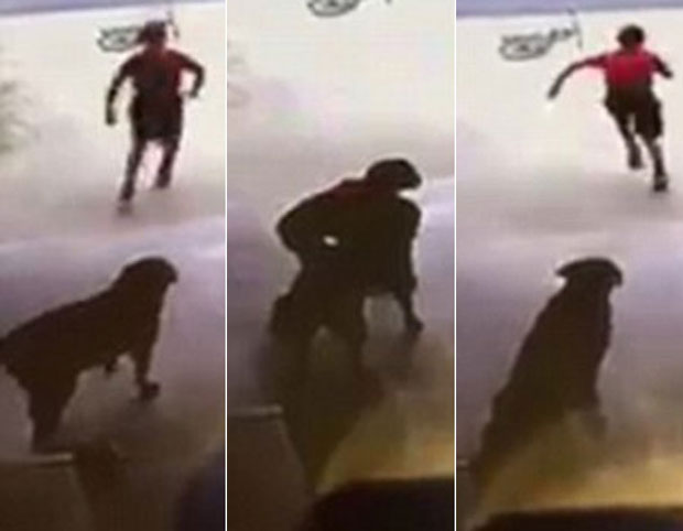 The young boy was seen riding his bike past her house before jumping off and running into the garage to play with and cuddle her pet dog Duchess.