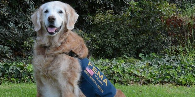 A certified FEMA disaster search dog, Bretagneresponded to multiple natural disasters across the country, including Hurricane Katrina and Hurricane Rita. Photo / Facebook